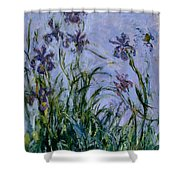 Purple Irises Shower Curtain