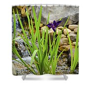 Purple Irises Growing In Waterfall Shower Curtain