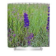 Purple Larkspur In A Meadow In Yellowstone National Park-wyoming Shower Curtain