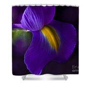 Purple Light Iris Macro Shower Curtain