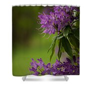 Purple Light Shower Curtain