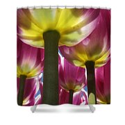 Purple Lights Shower Curtain
