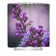 Purple Lilacs Shower Curtain