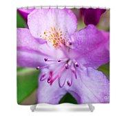Purple Long Pistil Flower Shower Curtain