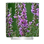Purple Loosestrife Shower Curtain