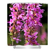 Purple Loosestrife Tall Shower Curtain