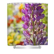 Purple Lupine Flowers Shower Curtain