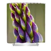 Purple Lupine Macro Shower Curtain