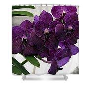 Purple Me Not Shower Curtain