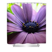 Purple Mexican Flower Shower Curtain