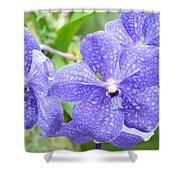 Purple Mokara Orchid Shower Curtain