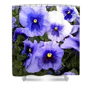 Purple Morning Glory Shower Curtain