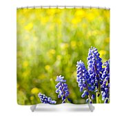Blue Muscari Mill Bunches Of Grapes Close-up  Shower Curtain