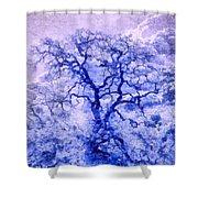 Purple Oak Tree Dream  Shower Curtain
