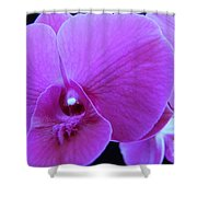 Purple Orchid 7 Shower Curtain