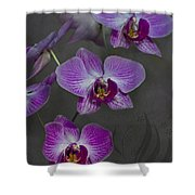 Purple Orchid Flower Shower Curtain