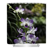 Purple Orchid Flower Inside The National Orchid Garden In Singapore Shower Curtain