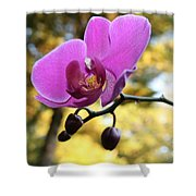 Purple Orchid In September Sun Shower Curtain