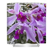 Purple Orchid Personality Shower Curtain