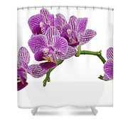 Purple Orchid-3 Shower Curtain