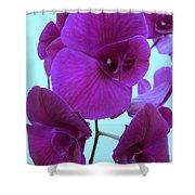 Purple Orchids 3 Shower Curtain