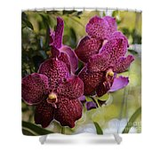 Purple Orchids With Bokeh Shower Curtain