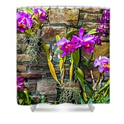 Purple Orchids With Cultured Stone Background Shower Curtain by Alex Grichenko