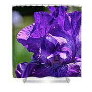 Purple Pandora Shower Curtain