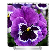 Purple Pansy Close Up Shower Curtain
