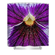 Purple Pansy In Pollen Shower Curtain