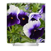 Purple Pansy Melody Shower Curtain