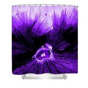 Purple Pansy Rising Shower Curtain