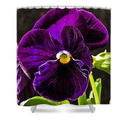 Purple Pansy Shower Curtain