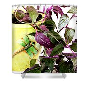 Purple Passion And Dragonfly Pot Shower Curtain