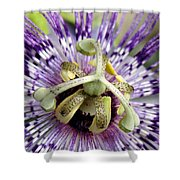 Purple Passion Flower Close Up  Shower Curtain