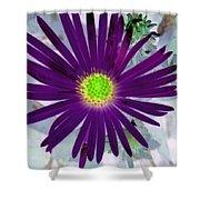 Purple Passion - Photopower 1605 Shower Curtain