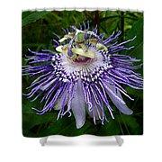Purple Passionflower Shower Curtain