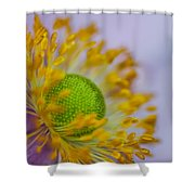Purple Pastel Daisy Shower Curtain