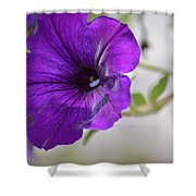 Purple Petunia 2013 Shower Curtain