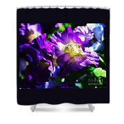 Purple Petunia Portrait Shower Curtain