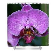 Purple Phalaenopsis Orchids Shower Curtain