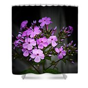 Purple Philox Shower Curtain