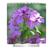 Purple Phlox Shower Curtain