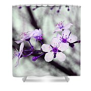 Purple Pink Blossoms Shower Curtain