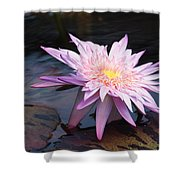 Purple Pink Yellow Waterlily... Shower Curtain