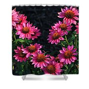 Purple Pow Echinacea  Shower Curtain