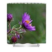 Purple Profiles Shower Curtain
