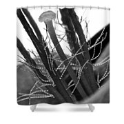 Purple Queen In Bw Shower Curtain