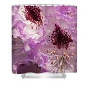 Purple Rhodo Shower Curtain