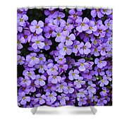 Purple Rockcress Shower Curtain